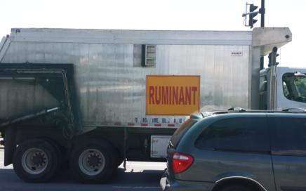 Camion ruminant