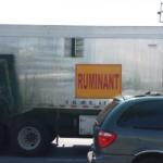Rencontre inattendue d'un camion ruminant